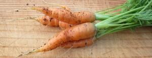 carrots1-300x116