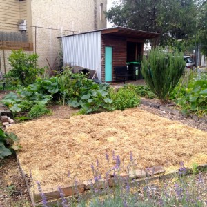 Regenerating the soil with a permaculture (no dig) garden