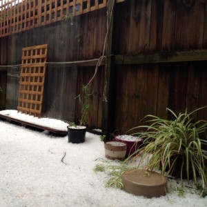Winter wonderland in the Inner West