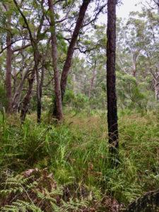 nature NSW