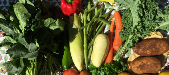 Gill Stannard naturopath nutritionist eat more vegetables