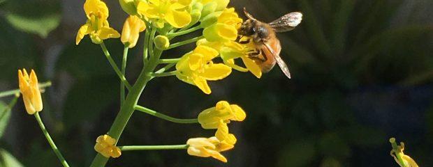 prevent hay fever hayfever treatment naturopath