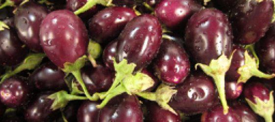 eggplant in season March Sydney