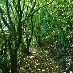 New Zealand bush track