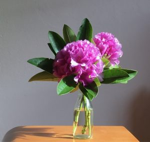 two purple flowers with green leaves in a clear glass bottle on wooden table