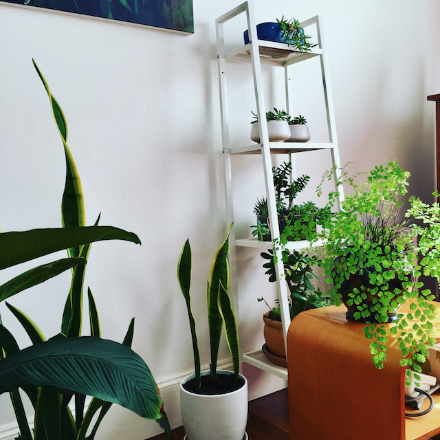 stay at home Gill Stannard Naturopath houseplants on a ladder shelf