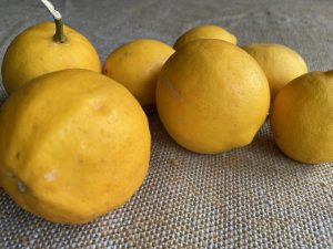 tumble of six lemons on beige-green hessian cloth ©gill stannard naturopath