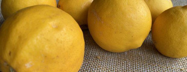 tumble of six lemons on beige-green hessian cloth ©gill stannard naturopath